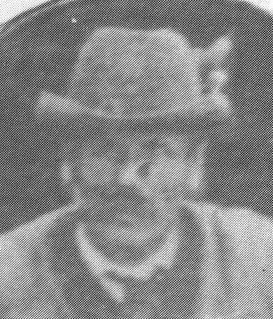 Thomas Grißmann - Vorst. von 1893 - 1900