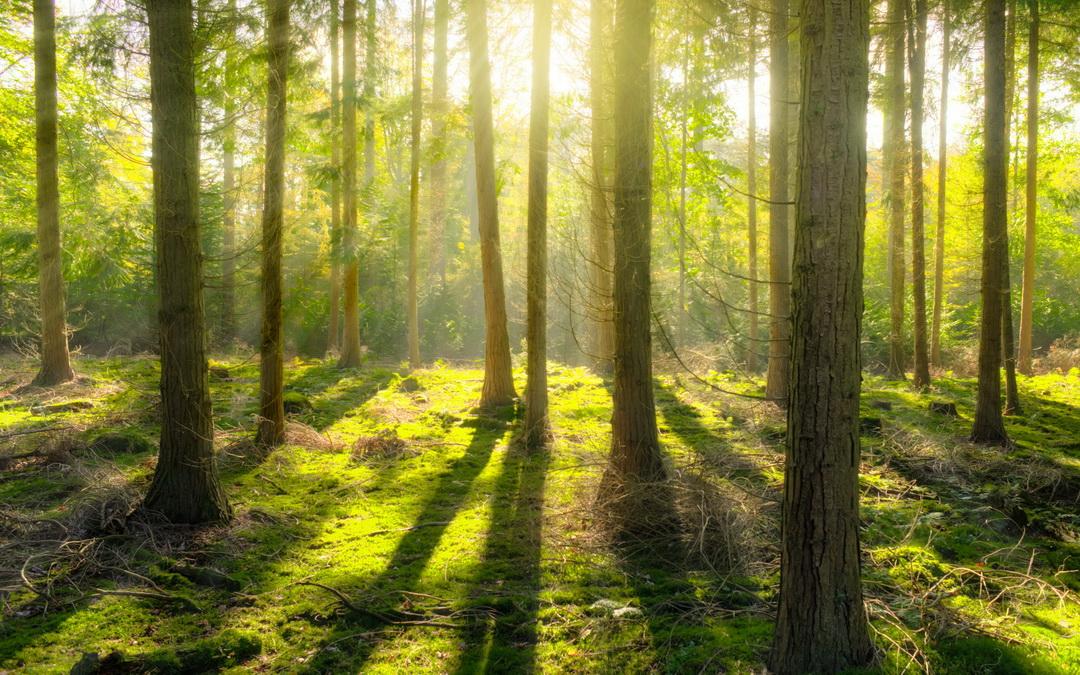 Der Wald in Osttirol 2020 –  Ein Jahr der Rekorde und Extreme
